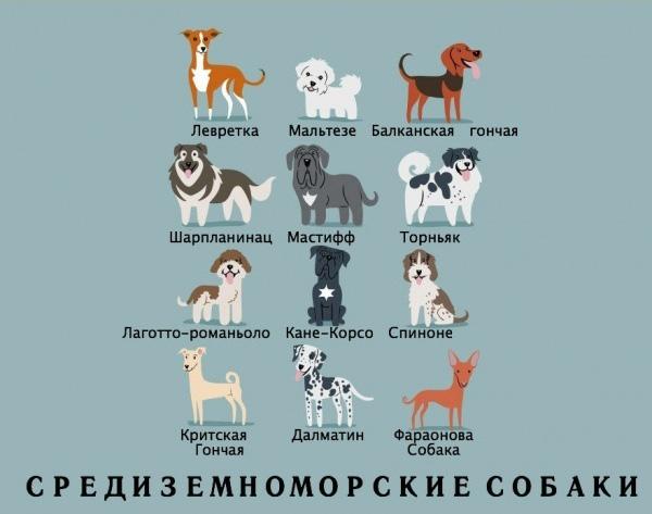 когда начали изучать породы собак множества трудностей