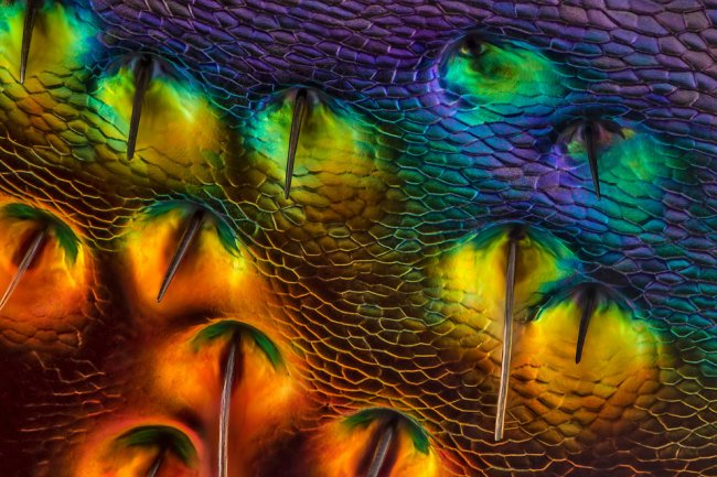 Конкурс микрофотографии Nikon Small World 2014